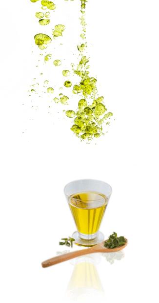 น้ำมันมะพร้าวสกัดเย็น กับ น้ำมันมะรุมสกัดเย็น มีความเหมือนหรือแตกต่างกันอย่างไร